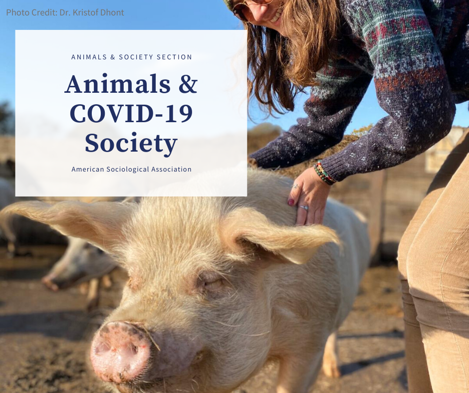 "Woman touching pig in pasture; reads: ""Animals & COVID-19 Society"""
